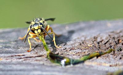 Photograph - Bee Nourishment by Terri Mills