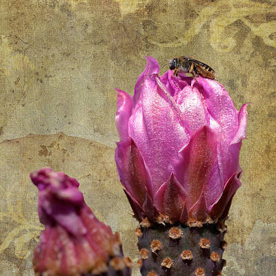 Photograph - Bee On A Beavertail Cactus by Sandra Selle Rodriguez