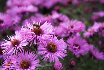 Photograph - Bee On A Daisy by Susan Leonard