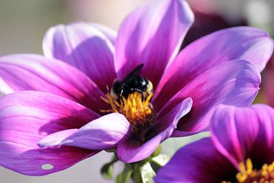 Western Art - Bee on A Flower by Paul Shefferly