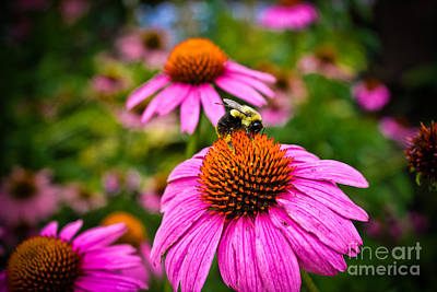 Photograph - Bee On A Pink Flower by Colleen Kammerer