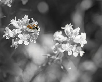 Bee On Black And White Flowers Art Print