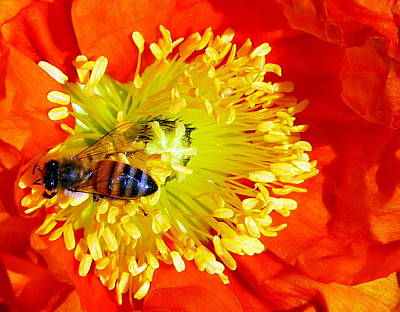 Photograph - Bee On Bloom by Jeff Lowe