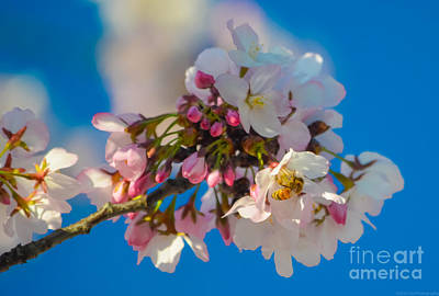 Photograph - Bee On Blossom by Jeff at JSJ Photography