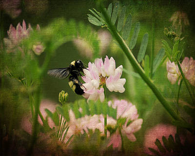 Photograph - Bee On Crown Vetch by TnBackroadsPhotos