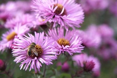 Photograph - Bee On Daisy by Susan Leonard