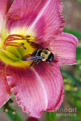 Digital Art - Bee On Day Lily by Eva Kaufman