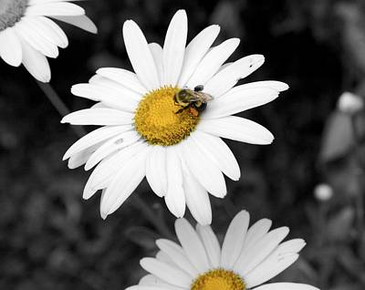 Bee On My Daisy Art Print by Kimberly Elliott
