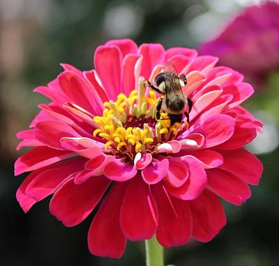 Print featuring the photograph Bee On Pink Flower by Cynthia Guinn