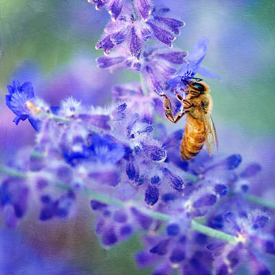 Bee Collects Nectar Photograph - Bee On Russian Sage #2 - Square Crop by Nikolyn McDonald