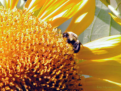 Photograph - Bee On Sunflower by Kay Lovingood