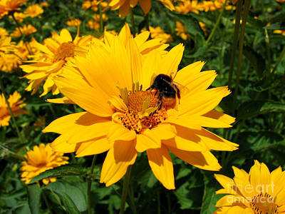 Photograph - Bee On Yellow Flower by Art Photography