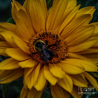 Photograph - Bee On Yellow Flower by Ronald Grogan