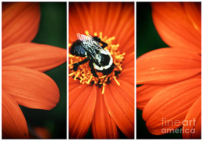 Photograph - Bee Panels by John Rizzuto