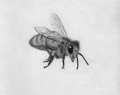 Drawing - Bee Pencil Drawing by Dan Julien
