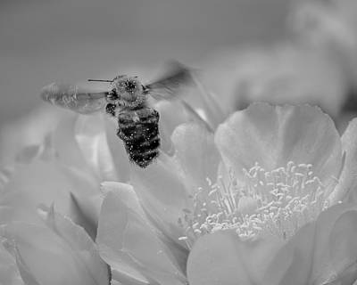 Photograph - Bee Rising by Len Romanick