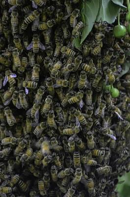 Photograph - Bee-swarm by Rae Ann  M Garrett