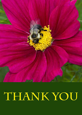 Photograph - Bee Thank You by Chris Scroggins