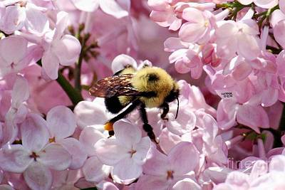 Wall Art - Photograph - bee by Vicki Hopper