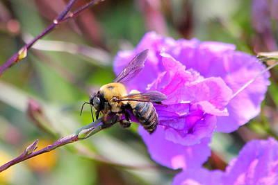 Photograph - Bee Wear by Reid Callaway