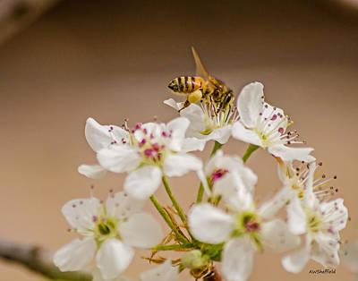 Photograph - Bee Working The Bradford Pear 4 by Allen Sheffield