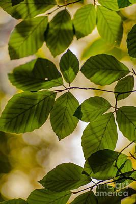 Beech Leaves And Bokeh Art Print