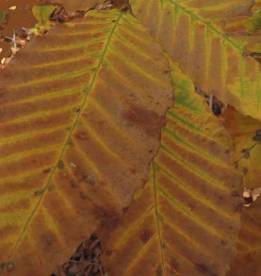 Beech Leaves Art Print by Aurora Levins Morales