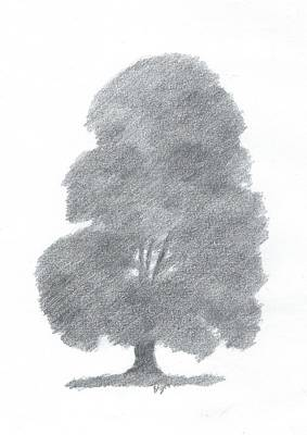 Beech Tree Drawing Number Four Art Print by Alan Daysh