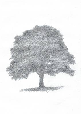 Beech Tree Drawing Number Three Art Print by Alan Daysh