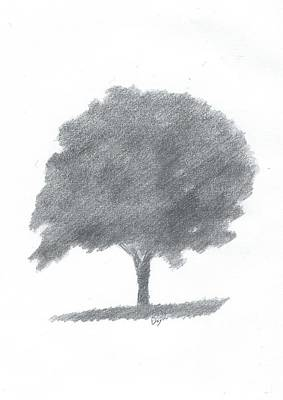 Beech Tree Drawing Number Two Art Print by Alan Daysh
