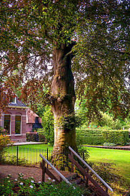 Photograph - Beech Tree. Idyllic Village. Venice Of The North by Jenny Rainbow