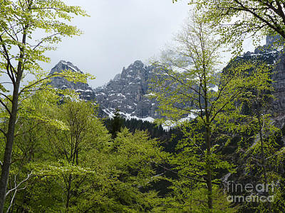Photograph - Beech Trees In Spring - Dolomites by Phil Banks