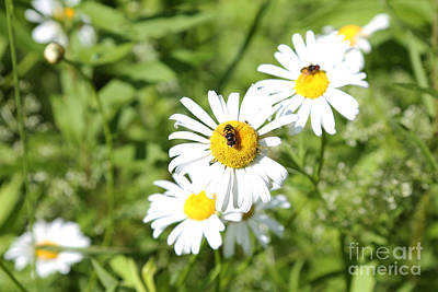 Bees And Daisies Art Print by Suzi Nelson
