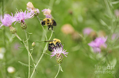 Book Quotes - Bees and Thistles by David Arment