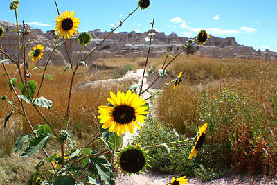 Photograph - Bees In Badlands by Jon Emery