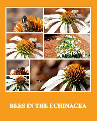 Photograph - Bees In The Echinacea by AJ  Schibig