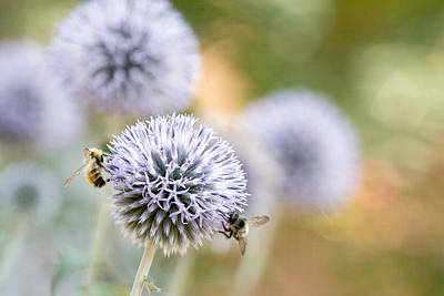 Art Print featuring the photograph Bees In The Garden by Peggy Collins