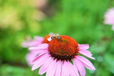 Photograph - Bees Knees by Debbie Sikes