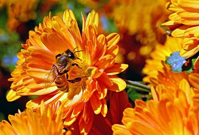 Photograph - Bee's Last Chance by Sandi OReilly