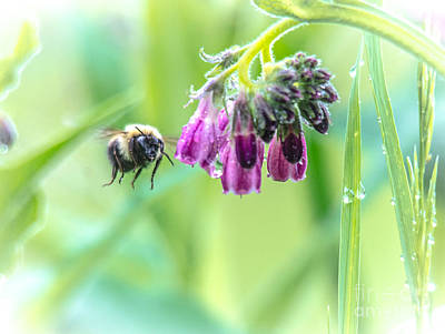 Photograph - Beesy Bee by Cheryl Baxter