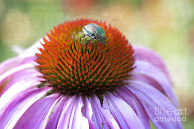 Iridescent Photograph - Beetle Bug by Juli Scalzi