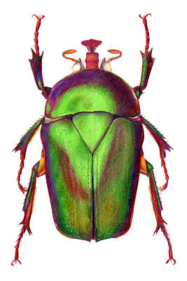 Iridescent Drawing - Beetle by Elizabeth Smith