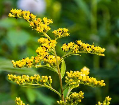 Flower Photograph - Beetle Mania by Steve Harrington
