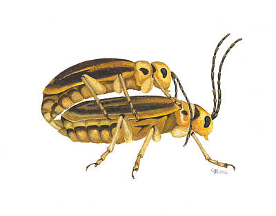 Painting - Chrysomelid Beetle Mating Pose by Cindy Hitchcock