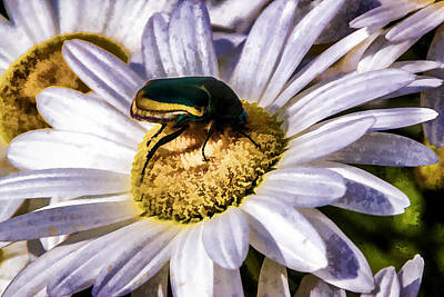 Digital Art - Beetle On A Daisy by Photographic Art by Russel Ray Photos