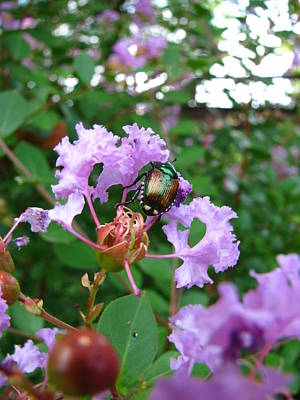 Photograph - Beetle On A Flower by Teresa Cox