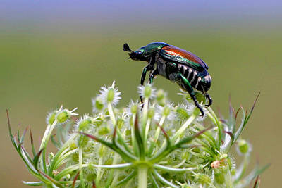 Photograph - Beetle On Top Of The World by Gene Walls