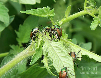 Art Print featuring the photograph Beetle Posse by Thomas Woolworth