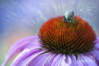 Coneflowers Photograph - Beetlemania by Juli Scalzi