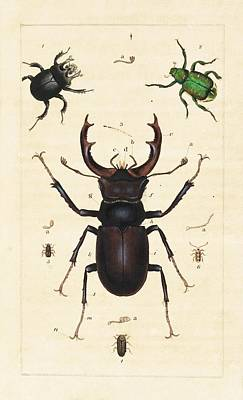 Beetles Art Print by King's College London